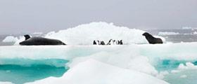 Visiter la gallerie Antartic